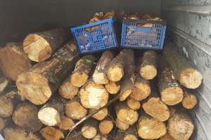 Chciał ukraść drewno z lasu. Bus był załadowany po brzegi