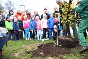 Jesienne nasadzenia drzew na nowej plaży miejskiej w Ełku