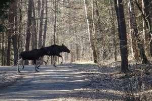 Jedziesz przez las — zachowaj ostrożność