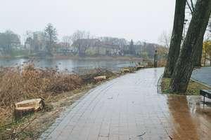 Wycinają drzewa nad jeziorem w Olsztynie