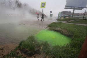 Zielona ciecz wydobywa się spod ziemi w Olsztynie. Czy mamy się czego obawiać? [ZDJĘCIA, VIDEO]