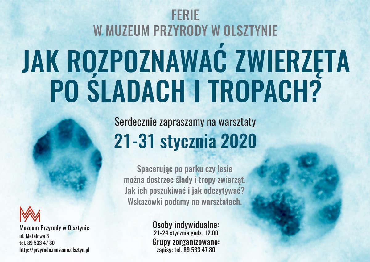 Ferie 2020 w Muzeum Przyrody w Olsztynie - full image