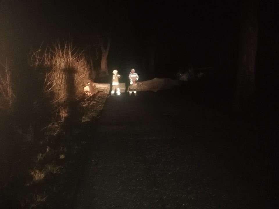 Strażacy OSP Bisztynek usuwali drzewo powalone na drogę Bisztynek-Prosity.