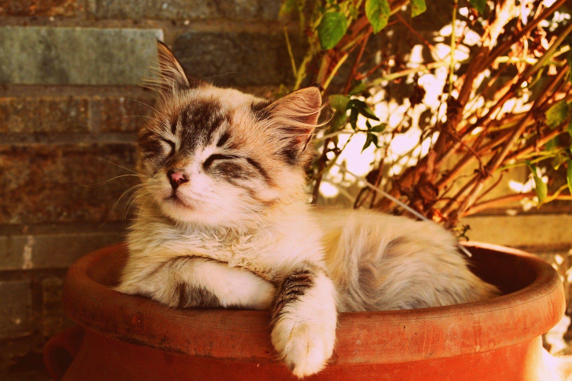 https://m.wm.pl/2020/02/orig/kitten-asleep-in-a-pot-1995961-1920-610935.jpg