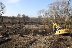 Trwa wycinka drzew i krzewów pod budowę w mieście drugiego mostu