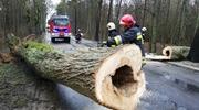 """Zerwany dach, połamane drzewa – """"Hanna"""" szaleje, a strażacy mają pracowite popołudnie"""
