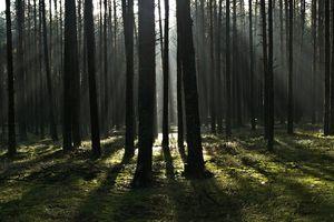 Pozytywny przekaz dnia: spędź kwarantannę w lesie [VIDEO]