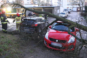 Powalone drzewa, zniszczone samochody. Wichury w Olsztynie i regionie [ZDJĘCIA, VIDEO]