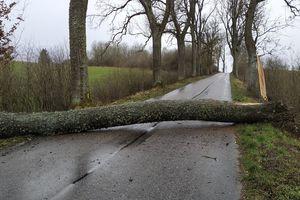 Wiatr przewracał drzewa i łamał gałęzie