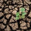 Susza Alert – nowe ostrzeżenie IMGW-PIB przed suszą hydrologiczną