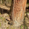 Niewybuch z II Wojny Światowej został znaleziony  w lesie pod Olsztynem