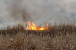 Pożar w Biebrzańskim Parku Narodowym [aktualizacja]