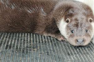 Pozytywny przekaz dnia: Dzięki leśnikom z Napromka wyleczone zwierzęta wróciły do swojego naturalnego środowiska [ZDJĘCIA]