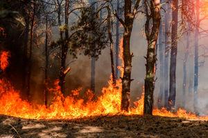 Strażacy z Nowego Miasta także ratują Biebrzański Park Narodowy