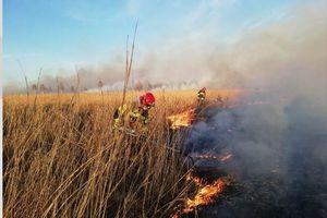 Giżyccy strażacy pomagają gasić pożar w Biebrzańskim Parku Narodowym