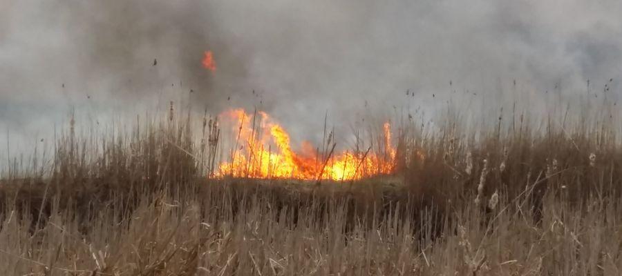 W Biebrzańskim Parku Narodowym płoną cenne przyrodniczo bagna. To niejedyny pożar w ostatnim czasie