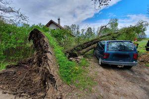 Drzewo runęło na samochód
