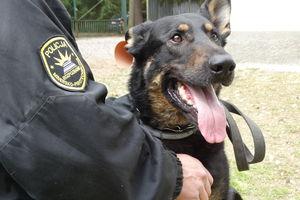 Policjanci szukali zaginionej 77-latki. Odnalazł ją pies tropiący