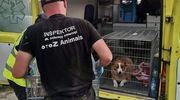 Uratowali 70 psów. Obrońcy praw zwierząt i prokuratura w schronisku dla zwierząt