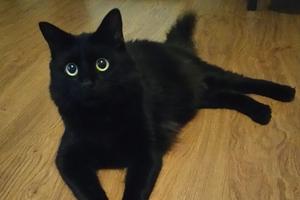 Mamy kolejne zgłoszenia do plebiscytu Super Pies i Super Kot [ZDJĘCIA, AKTUALNE WYNIKI]