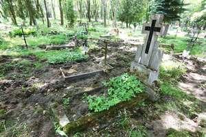 Ten cmentarz to (dziki) park [ZDJĘCIA, VIDEO]