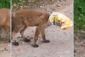 Śmieci to śmiertelne zagrożenie dla zwierząt [ZOBACZ FILM]