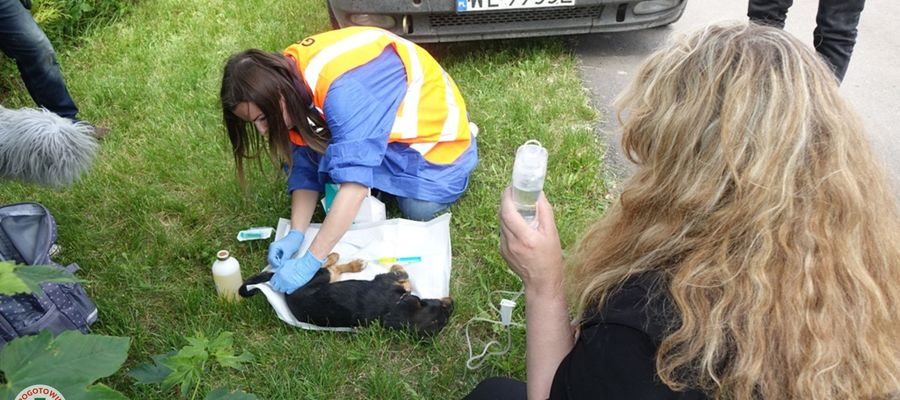 Akcja ratowania zwierząt ze schroniska w Radysach