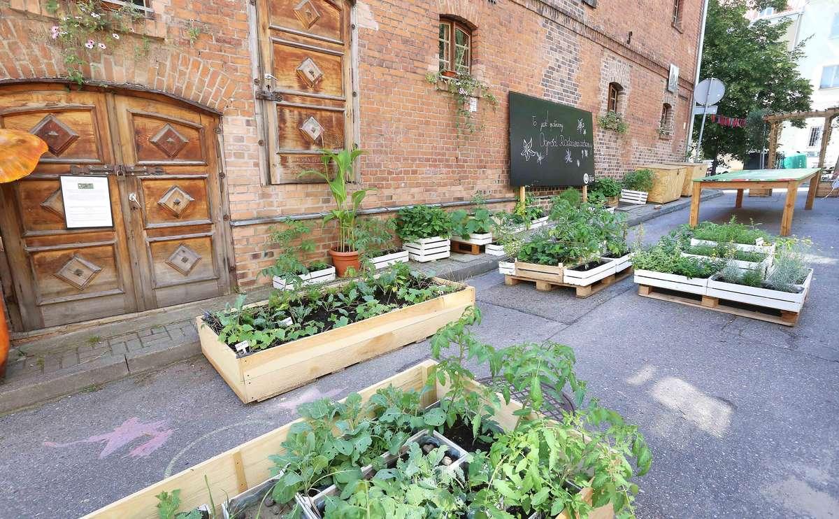 Ogród Rodziewiczówny - full image