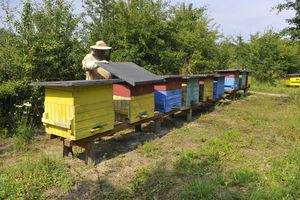 Z nienawiści do sąsiada zabił mu pszczoły