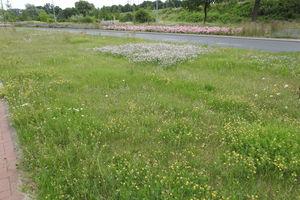 Czym różnią się kwietne łąki od niekoszonych trawników w Olsztynie?