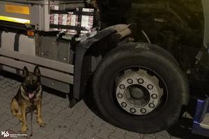 Psy służbowe w akcji, czyli przemyt papierosów wykryty w Bezledach