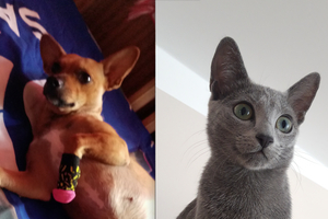 Perła i Nala wygrały! Rozstrzygnęliśmy plebiscyt Super Pies i Super Kot [WYNIKI]