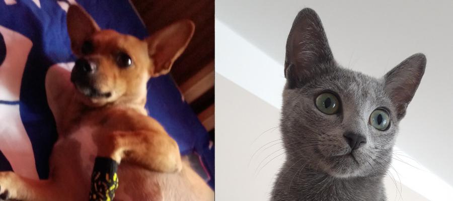 Perła i Nala — zwyciężczynie naszego plebiscytu Super Pies i Super Kot