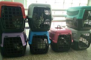 Wracamy do tematu: koty znalazły bezpieczne schronienie