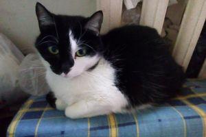 Fifi, Pusia, Wandzia i pozostałe koty czekają na miejsce w schronisku