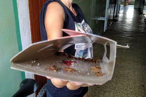 Mieszkańcy boją się, że karaluchy zjedzą ich żywcem