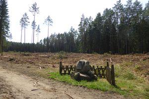 Wczoraj był las, dziś jest poręba