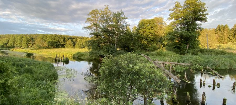 Pozostałości po drewnianym moście na Łynie w Pistkach