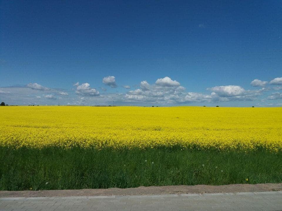 Zdjęcie z okolic Lipowa