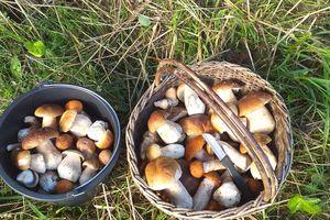 Wreszcie sypnęło grzybami! Kosze pełne borowików [ZDJĘCIA]