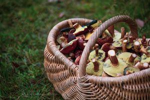 Grzyby, grzyby — a zdrowie?