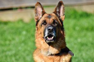 Kara za szczekanie psa? W elbląskim sądzie zapadł wyrok