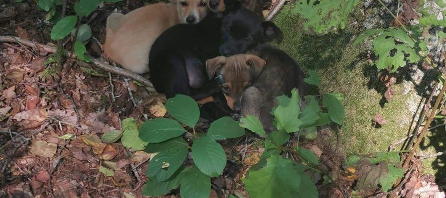 Wyrzucone do lasu cztery szczeniaki