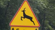 Sarna i dzik zagrozili kierowcom i pasażerom