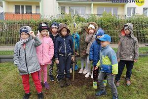"""Projekt """"Drzewo"""" w Przedszkolu nr 5 w Działdowie"""