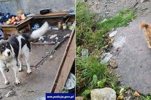 Brudne, zapchlone i wychudzone. Policjanci uratowali dwa zaniedbane psy