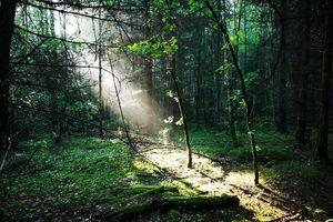 Wymień zdjęcie na prenumeratę: Grabowiec koło Lelkowa