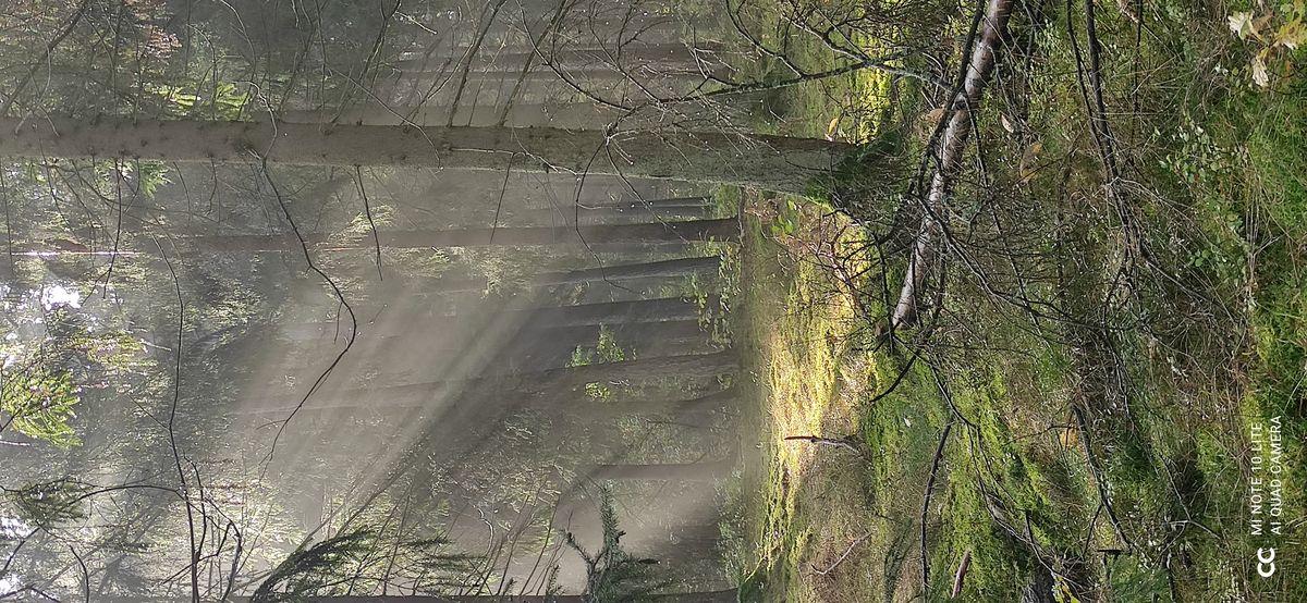 Las w okolicach Dywit