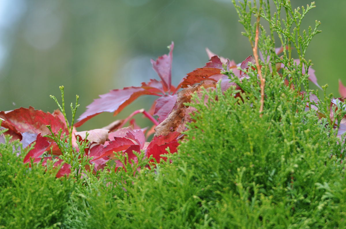 Przyczajona jesień