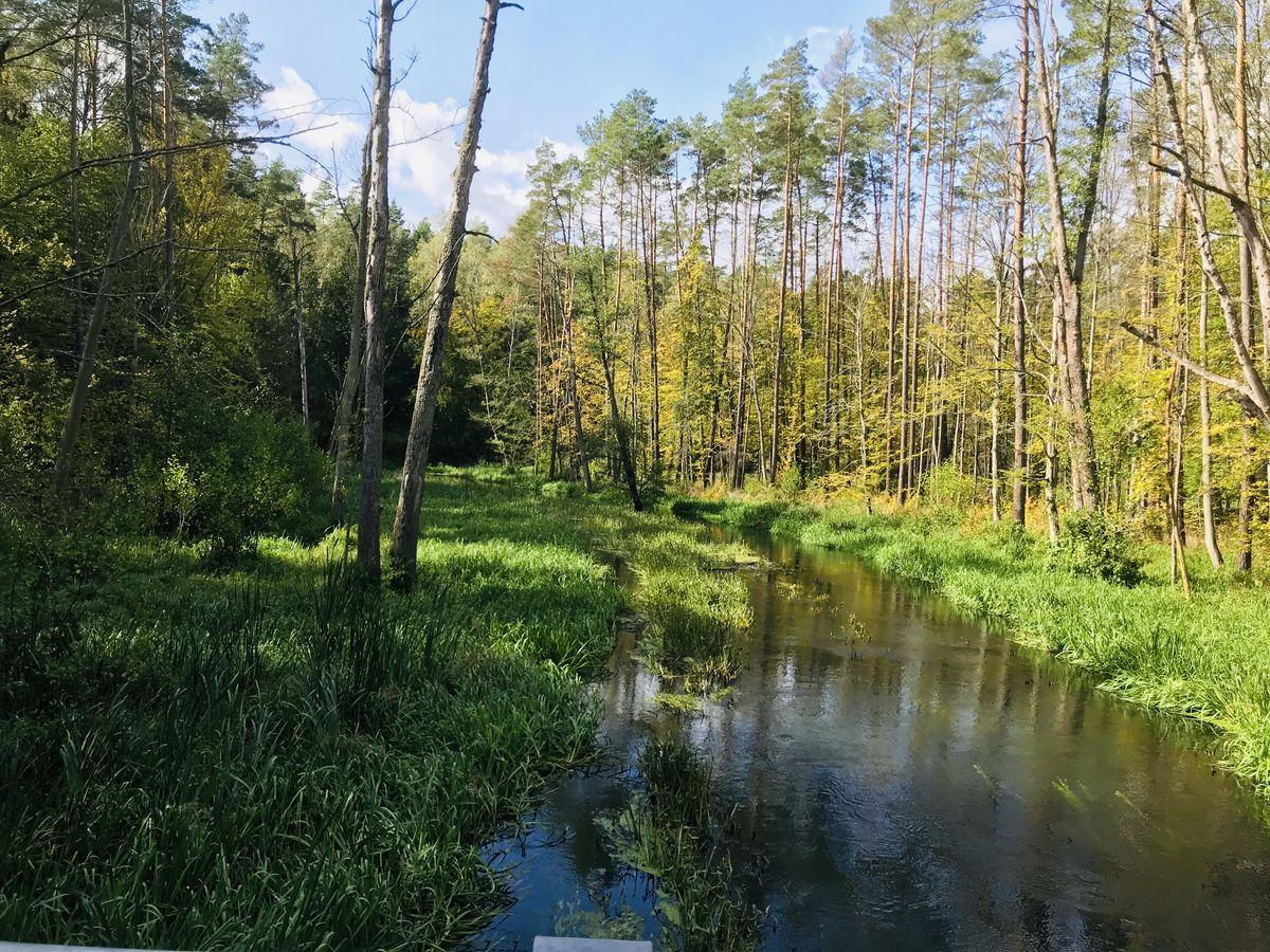 Łyna w Lesie Miejskim